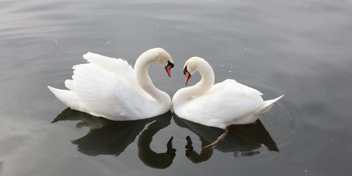woran erkennt man wahre liebe