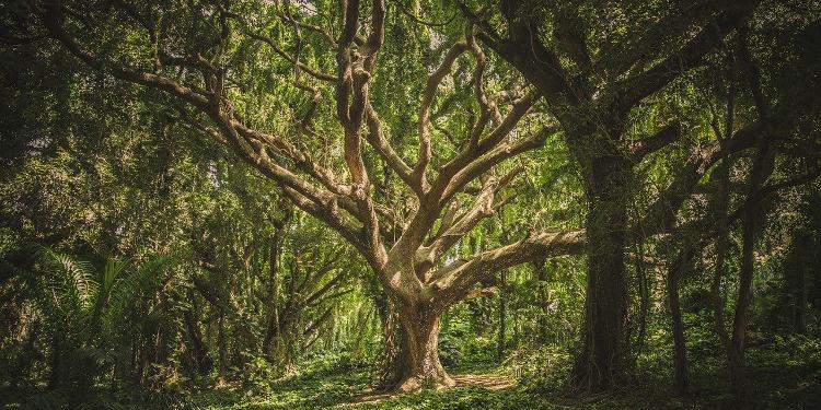 Selbstliebe ist nicht unnatürlich! Beispiel Baum Selbstfürsorge