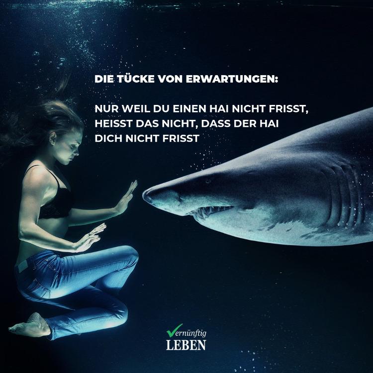 Die Tücke von Erwartungen: Nur weil du einen Hai nicht frisst, heißt das nicht, dass der Hai dich nicht frisst