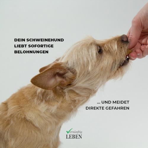 Gewohnheiten ändern: Dein innerer Schweinehund liebt sofortige Belohnungen und meidet direkte Gefahren
