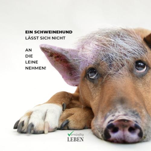Gewohnheiten ändern: Dein innerer Schweinehund lässt sich nicht an die Leine nehmen!